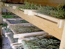 Dessiccateur traditionnel pour les herbes et les épices de séchage images libres de droits