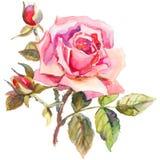 Dessin élégant de fleur rose dans le style d'aquarelle Utilisé pour le DES Photos stock