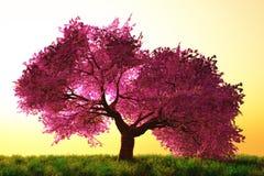 Dessin animé japonais mystérieux de jardin de fleurs de cerise Image libre de droits
