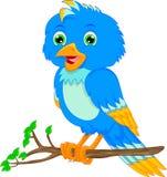 Dessin animé mignon d'oiseau Photo libre de droits