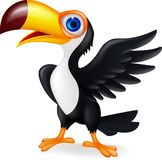 Dessin animé toucan drôle d'oiseau Photographie stock libre de droits