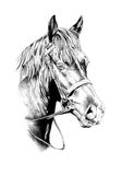 Dessin au crayon à main levée de tête de cheval Photographie stock libre de droits