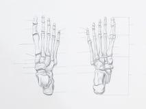 Dessin au crayon d'os de pied photographie stock libre de droits