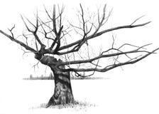 Dessin au crayon d'un vieil arbre nu noueux Photo stock