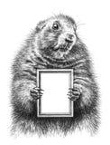 Dessin au crayon d'une marmotte Photographie stock libre de droits