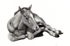 Dessin au crayon de cheval de chéri Photos stock