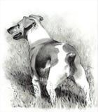 Dessin au crayon de crabot de chien terrier de Jack Russell Images stock
