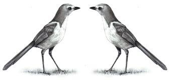 Dessin au crayon de deux oiseaux tête à tête Image libre de droits