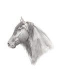Dessin au crayon de graphite d'un cheval frison Images stock