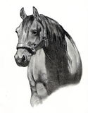 Dessin au crayon de tête de cheval Images libres de droits