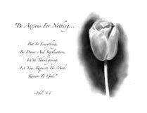 Dessin au crayon de tulipe avec le vers de bible Photos libres de droits