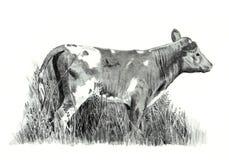 Dessin au crayon de veau restant dans l'herbe Image libre de droits