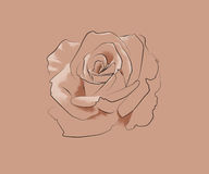 Dessin au trait d'une rose Photo libre de droits