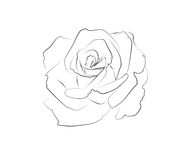 Dessin au trait d'une rose Photographie stock