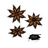 Dessin d'Anise Star Vector Croquis tir? par la main Illustration saisonni?re de nourriture illustration stock