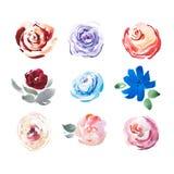 Dessin d'aquarelle de la peinture d'aquarelle de fleurs fraîches de pré d'été Photos stock