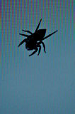Dessin d'araignée Photos stock