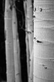 Dessin d'Aspen Photographie stock libre de droits