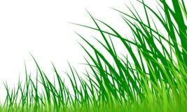 Dessin d'herbe verte Images stock