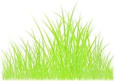 Dessin d'herbe verte Photographie stock libre de droits