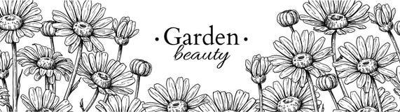 Dessin de bannière de fleur de marguerite Frontière florale gravée tirée par la main de vecteur Camomille Image stock