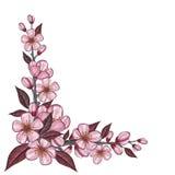 Dessin de branche d'arbre avec la fleur rose de cerise pour la décoration faisante le coin Photos stock