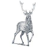 Dessin de cerfs communs illustration de vecteur