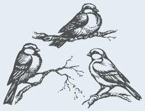 Dessin de dessin à main levée de vecteur Mésanges, moineaux et bouvreuils sur le branc Photos stock