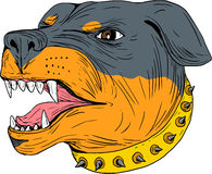 Dessin de Dog Head Aggressive de garde de rottweiler Illustration Stock