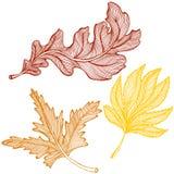 Dessin de feuilles d'automne Photographie stock