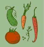 Dessin de légumes de vecteur Image libre de droits