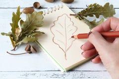 Dessin de main avec le stylo et le carnet à dessins Autumn Leaves Image libre de droits