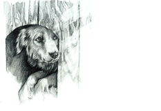 Dessin de main de chien de croquis Photo libre de droits