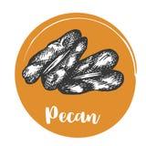 Dessin de main de vintage de noix de pécan de rétro conception d'illustration nuts de vecteur illustration stock