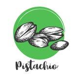 Dessin de main de vintage de pistache de rétro conception d'illustration nuts de vecteur illustration de vecteur