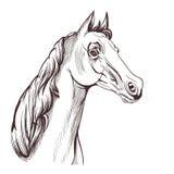 Dessin de tête de cheval Image stock