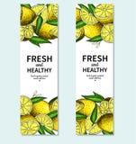 Dessin de vecteur de bannière de citron Calibre de cadre d'agrumes Photographie stock
