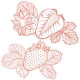 Dessin de vecteur des fraises Photo libre de droits