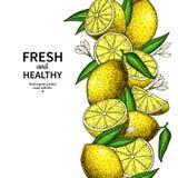 Dessin de vecteur de frontière de citron Calibre de cadre d'agrumes Photographie stock libre de droits