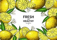 Dessin de vecteur de label de citron Calibre de cadre d'agrumes Images stock