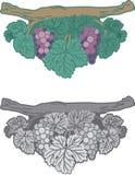 Dessin de vecteur de raisin, black&white et dedans polychrome illustration stock
