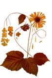 Dessin des feuilles sèches de chute des usines et des branches Photos stock