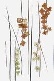 Dessin des feuilles sèches de chute des usines et des branches Images stock