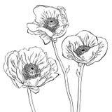 Dessin des fleurs de pavot Photographie stock libre de droits
