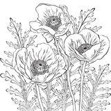 Dessin des fleurs de pavot Photos stock