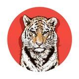 Dessin graphique de couleur d'un tigre de Bengale faune Grand chat Images stock