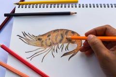 Dessin grillé de crevette sur le livre de dessin et les crayons colorés image stock