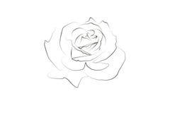 Dessin linéaire d'une rose illustration de vecteur
