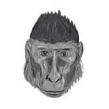 Dessin noir crêté de tête de Macaque Images libres de droits
