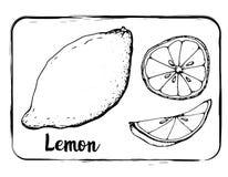 Dessin noir et blanc de main de croquis de fruit de croquis de fruit d'isolement illustration de vecteur